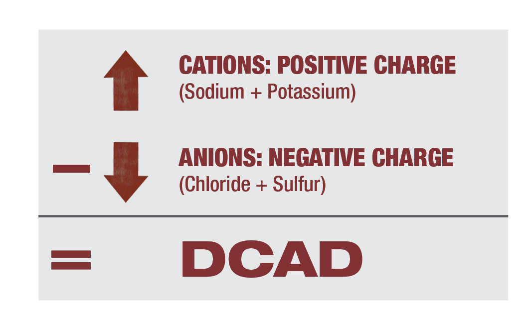DCAD Balancing Equation