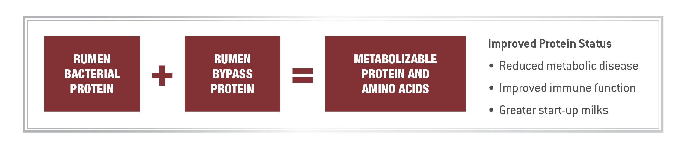 Metabolizable Protein Diagram