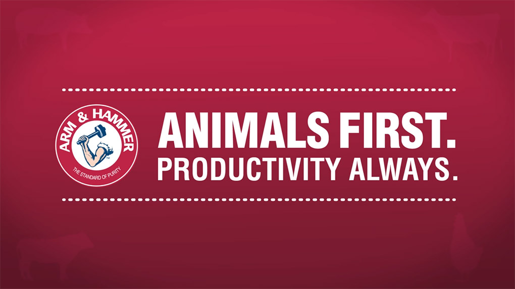 Animals First. Productivity Always.
